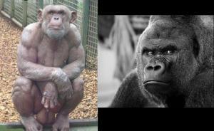 chimpballs